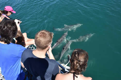 Brisbane Day Cruise and Eco Marine Safari